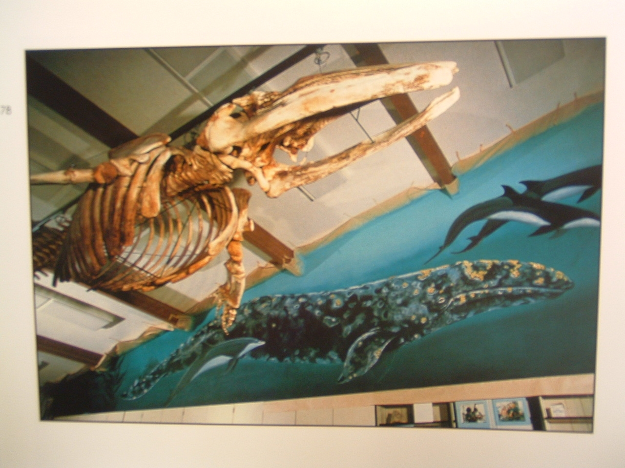 Wyland's Whaling Wall at the Ocean Institute in 1982